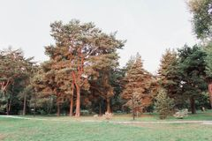 Massive trees in the park royalty free stock images