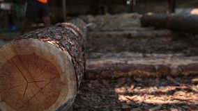 Massive wooden trunk rolling at sawmill stock video