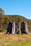 Massives altes Baumkabel Stockbilder