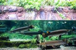 Massivt fiskakvarium royaltyfri fotografi
