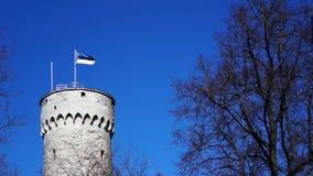 Massivt gammalt historiskt torn i Tallinn (Estland) med en flaggstång och den vinkande flaggan av Estland på den lager videofilmer