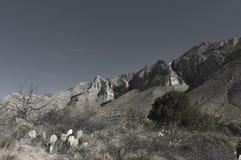 Massivt kalkstenbildande av El Capitan royaltyfria foton