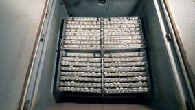 Massor av ägg i burar Fjäderfä ägg är i burar som packas i rader arkivfilmer