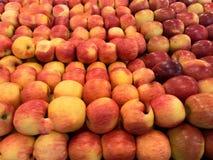 Massor av äpplen Royaltyfria Bilder