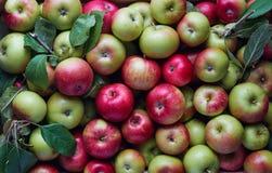 Massor av äpplen i en spjällåda arkivfoton