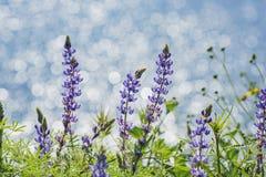 Massor av blomning för lös blomma på Diamond Valley Lake royaltyfri foto