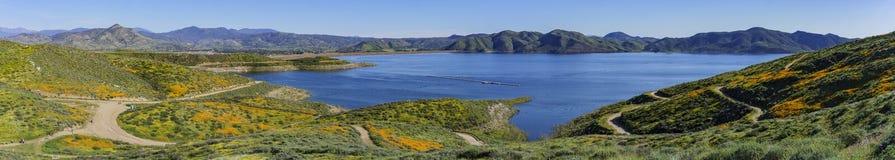 Massor av blomning för lös blomma på Diamond Valley Lake arkivbilder