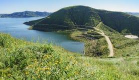 Massor av blomning för lös blomma på Diamond Valley Lake arkivfoton