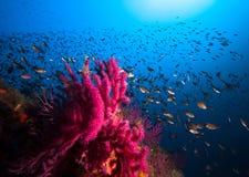 Massor av fisk i en medelhavs- rev Arkivfoto