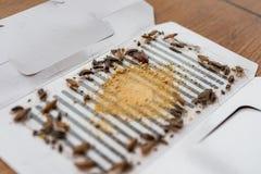Massor av kackerlackor har fångats av klistermärken eller stopparen Arkivfoton