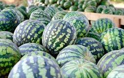 Massor av mogen vattenmelon Arkivfoto