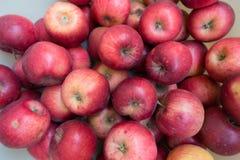 Massor av röda Jonathan äpplen i höst royaltyfri foto