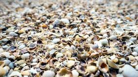 Massor av skal täcker havet 2 Arkivfoto