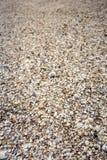 Massor av skal täcker havet 3 Royaltyfria Foton
