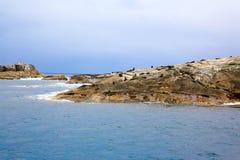 Massor av skyddsremsor som ligger på den steniga kustlinjen, Te Anau, Nya Zeeland Royaltyfri Bild