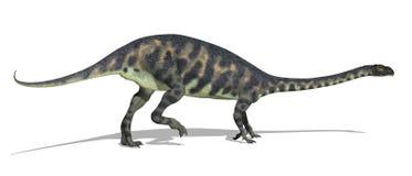 Massospondylus Dinosaur Stock Image