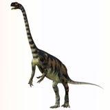Massospondylus over White. Massospondylus was a herbivorous prosauropod dinosaur that lived during the Jurassic Period of South Africa Stock Image