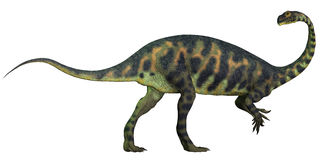 Massospondylus Profile. Massospondylus was a prosauropod dinosaur from the Jurassic Age of Africa and was a herbivore Royalty Free Stock Images