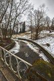Mast сосны и высокие березы в хмурой зиме, покрытый снег парк, обрабатывать искусства стоковое изображение