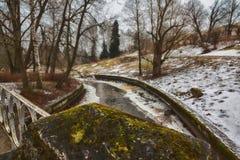 Mast сосны и высокие березы в хмурой зиме, покрытый снег парк, обрабатывать искусства стоковые фотографии rf