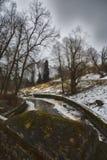Mast сосны и высокие березы в хмурой зиме, покрытый снег парк, обрабатывать искусства стоковое фото rf