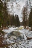 Mast сосны и высокие березы в хмурой зиме, покрытый снег парк, обрабатывать искусства стоковая фотография rf