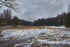Mast сосны и высокие березы в хмурой зиме, покрытый снег парк, обрабатывать искусства стоковое изображение rf