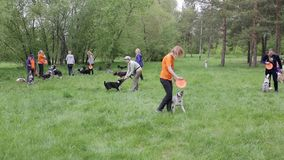 Master class on training dogs stock video footage