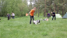Master class on training dogs stock footage
