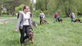Master class on training dogs stock video