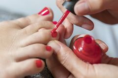 The master covers the customer's nails with varnish. Hands in gloves cares about a woman's foot nails. Pedicure, manicure beauty royalty free stock photo