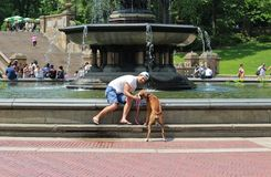 Master gives the dog water in Central Park Royalty Free Stock Photos