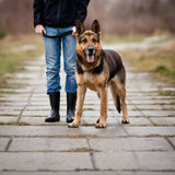 Master and her obedient  dog Royalty Free Stock Photography