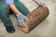 Master holds in his hands Billet of logs Stock Photo