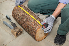 Master measures the length billet of logs Royalty Free Stock Photography