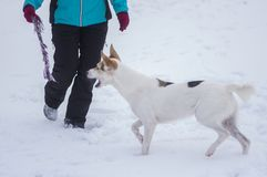 Master playing with mixed breed dog with rope. At winter season royalty free stock photo