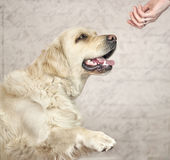Master wanting to greet with dog Stock Images