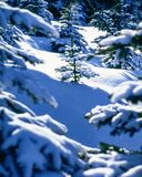 Winter. Master work of winter,snow landscape royalty free stock photography