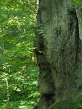 Masterpieces of nature. Stone head monk. In the forest Stock Photos