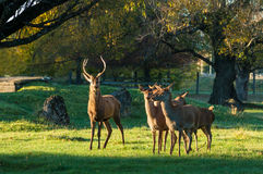 Masterton Deer Park Stock Photo