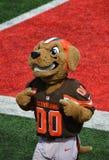 Mastica la mascotte di Cleveland Ohio NFL Cleveland Browns Fotografia Stock Libera da Diritti