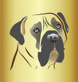 Mastif psia głowa na złocistym tle Zdjęcia Stock