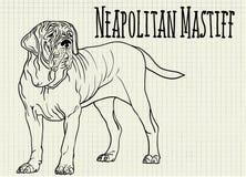 Mastiff иллюстрации неаполитанский на листе тетради Стоковая Фотография