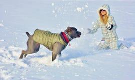 Mastiff corso тросточки играя снег зимы молодой женщины Стоковое фото RF