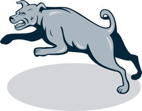 Mastiff Dog Mongrel Jumping Cartoon. Illustration of an angry barking mastiff dog mongrel viewed from side jumping on white background done in cartoon style Stock Image