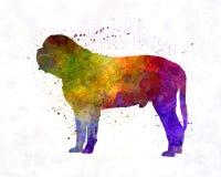 Mastiff in watercolor Stock Images