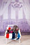 Mastino de Neapolitana de chiot se trouvant sur le sofa Maitres-chien de chien formant des chiens depuis l'enfance Photographie stock