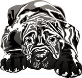 Mastino napoletano puppy royalty free illustration