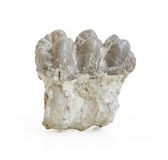 Mastodon molar isolated on white background Stock Photo