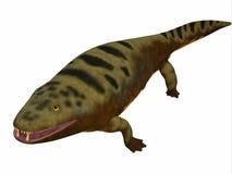 Mastodonsaurus Amphibian Body. Mastodonsaurus was an aquatic amphibian animal that lived in Europe during the Triassic Period stock illustration